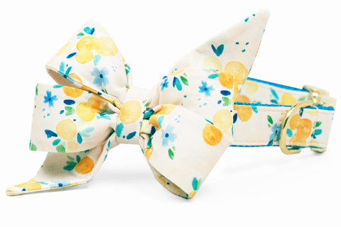 Sunday Brunch Belle Bow Dog Collar