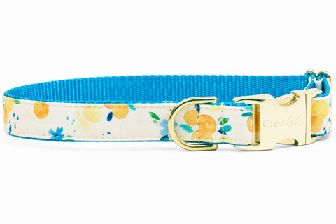 Sunday Brunch Dog Collar - Two Styles!