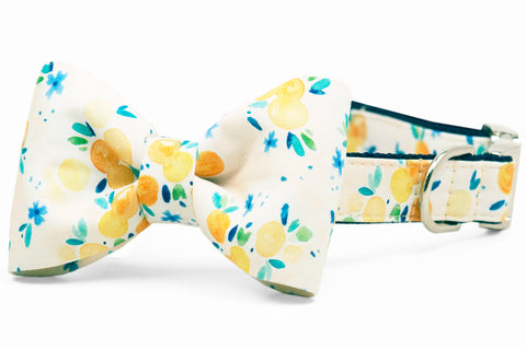 Sunday Brunch Bow Tie Dog Collar