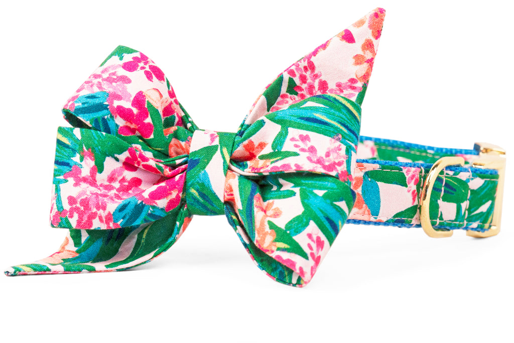 Tropical Paradise Belle Bow Dog Collar
