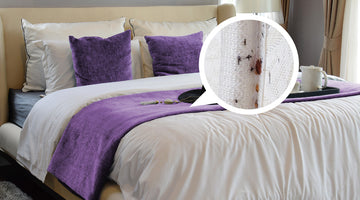 Signs That Your Hotel May Have Bed Bugs