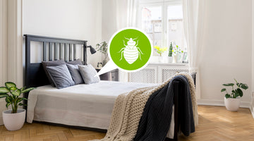 What to Do If You Suspect a Bed Bug Reinfestation