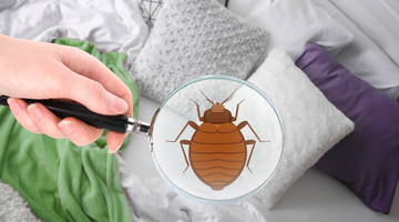 17 Surprising Facts About Bed Bugs