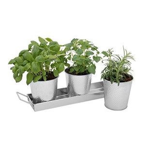 3 Herb Pots with Tray