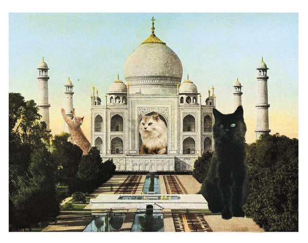 Cat-astrophe: The Taj Mahal