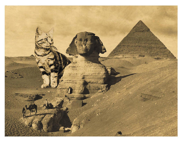Cat-Astrophe: The Sphinx