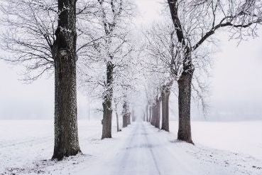 Road covered in snow and lined with snow covered trees