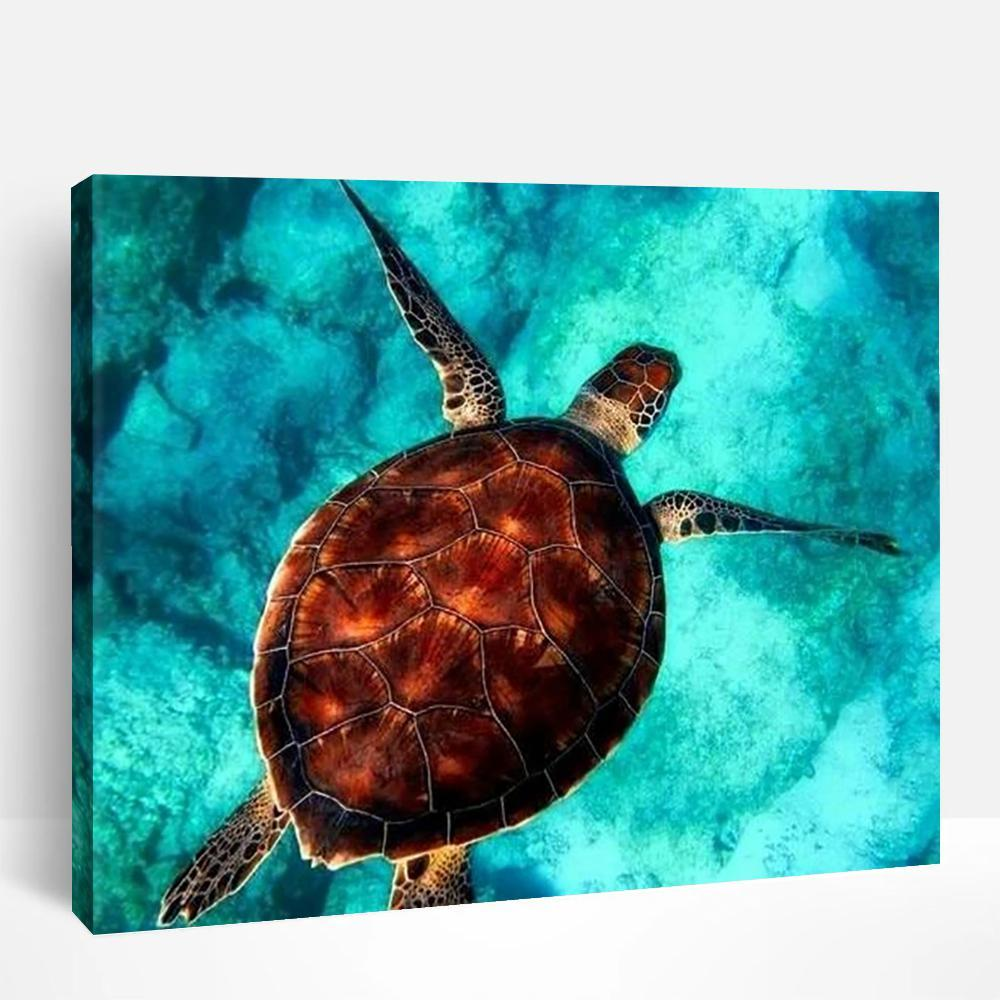 Sea Turtle | Paint By Numbers