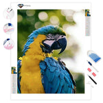 Blue & Gold Macaw | Diamond Painting