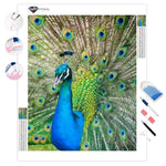 Peacock | Diamond Painting