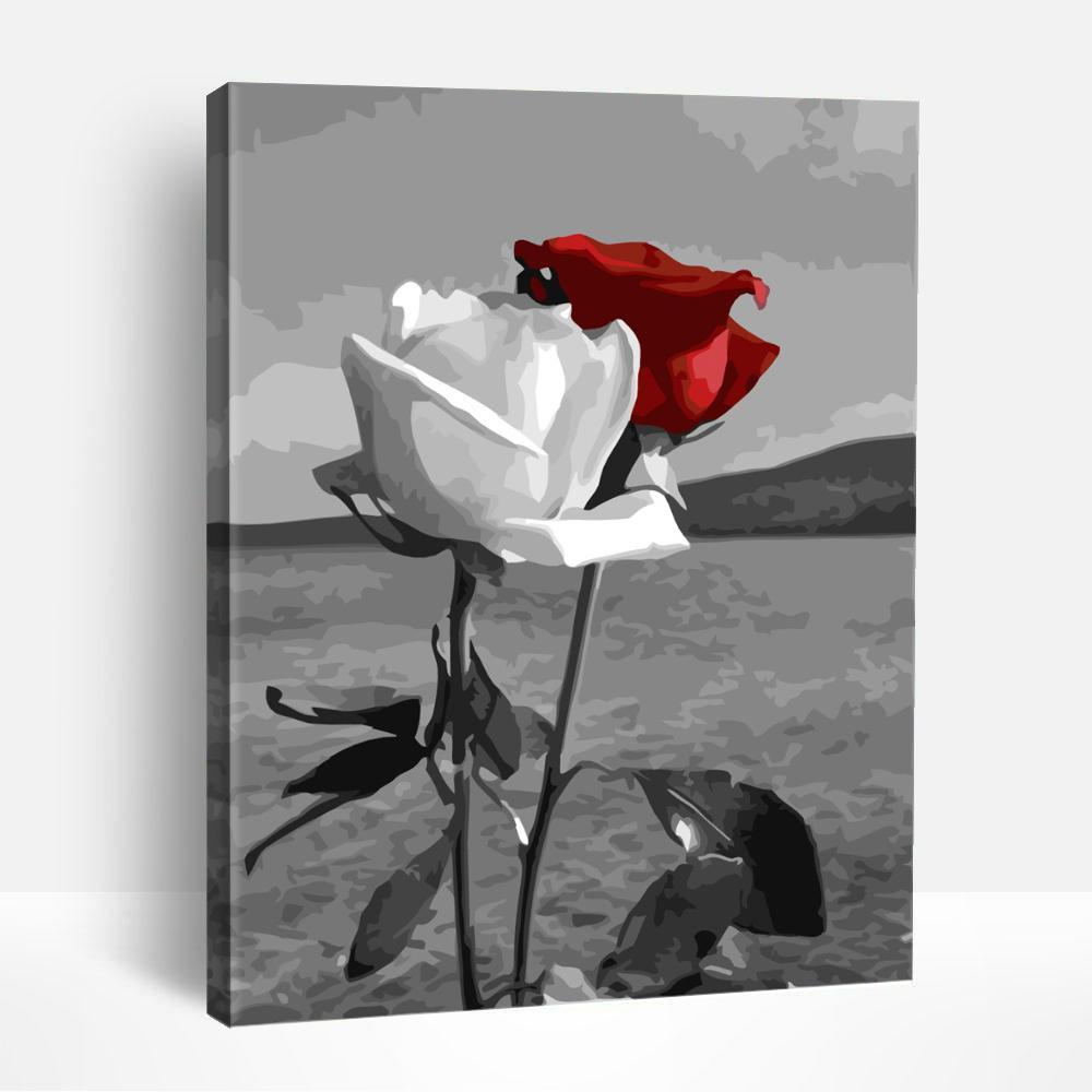 Red and White Rose | Paint By Numbers