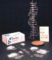 Picture of Deluxe DNA Model with Paint