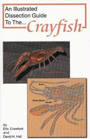 Picture of Dissection Guide to the Crayfish