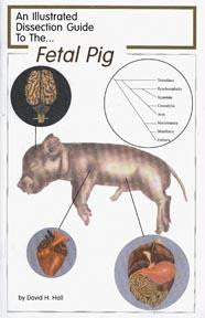 Picture of Dissection Guide to the Fetal Pig