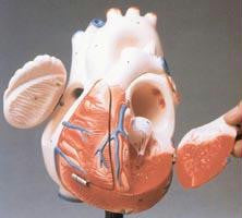 Picture of Giant Hands-On Heart