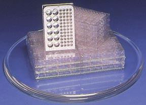 Picture of Microplates - Large Wells (Pack of 6)