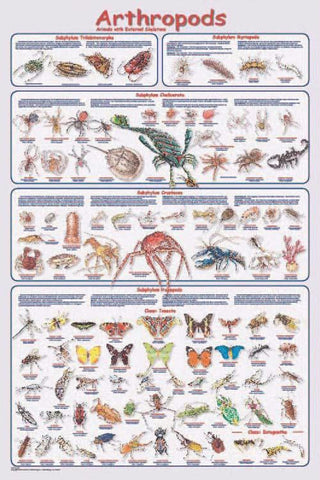 Picture of Arthropods Poster