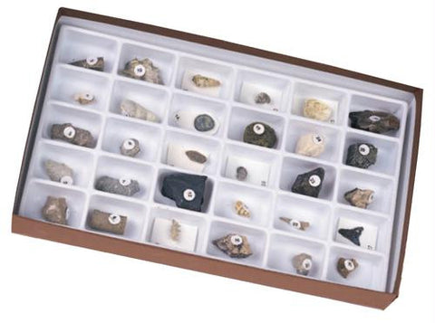 Picture of Advanced Fossil Collection