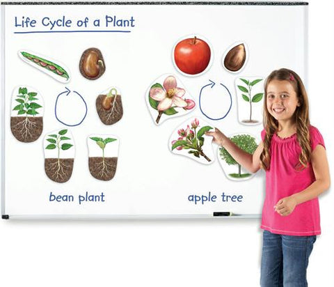 Picture of Giant Magnetic Plant Life Cycles