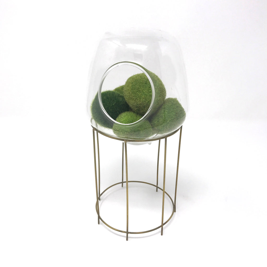 Igloo Terrarium Tabletop