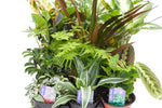 "3.5"" Assorted Tropicals"