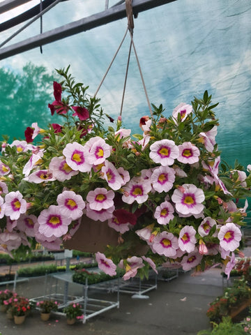 "10"" Annual Hanging Basket"