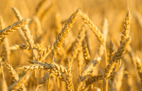 Gluten-Free & Wheat-Free: What's the Difference?