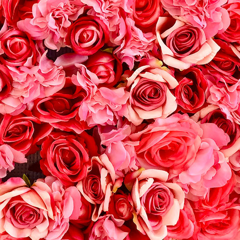 FRESH ROSES(AVAILABLE NOW!!!)