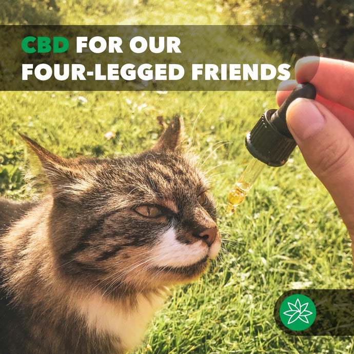 CBD oil for our Four - legged Friends.