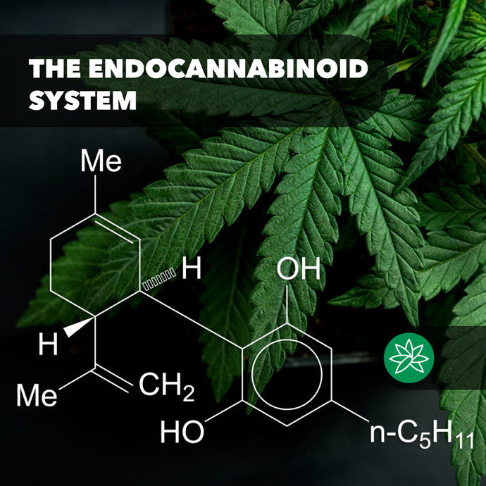 The Endocannabinoid system.