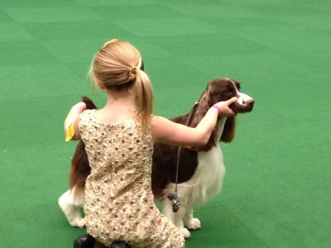 Surely one of the youngest handlers in the Springer Spaniel ring, where I was stewarding.  Couldn't resist the picture!!