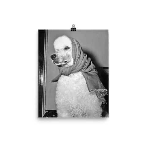 Rebecca Ray Designs - Babushka poodle - 8x10 - Poster - Made in America