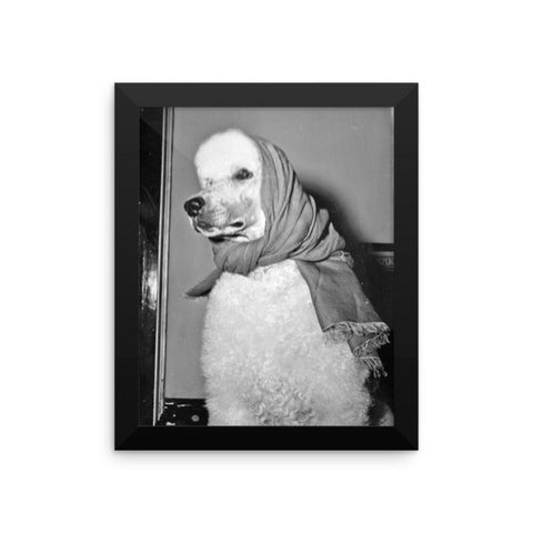 Rebecca Ray Designs - Babushka poodle - Framed - 8x10 - Poster - Made in America