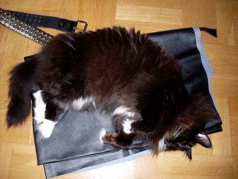 large black fluffy cat sleeping on faux leather fabric