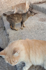 Street cats in Rabat Morocco