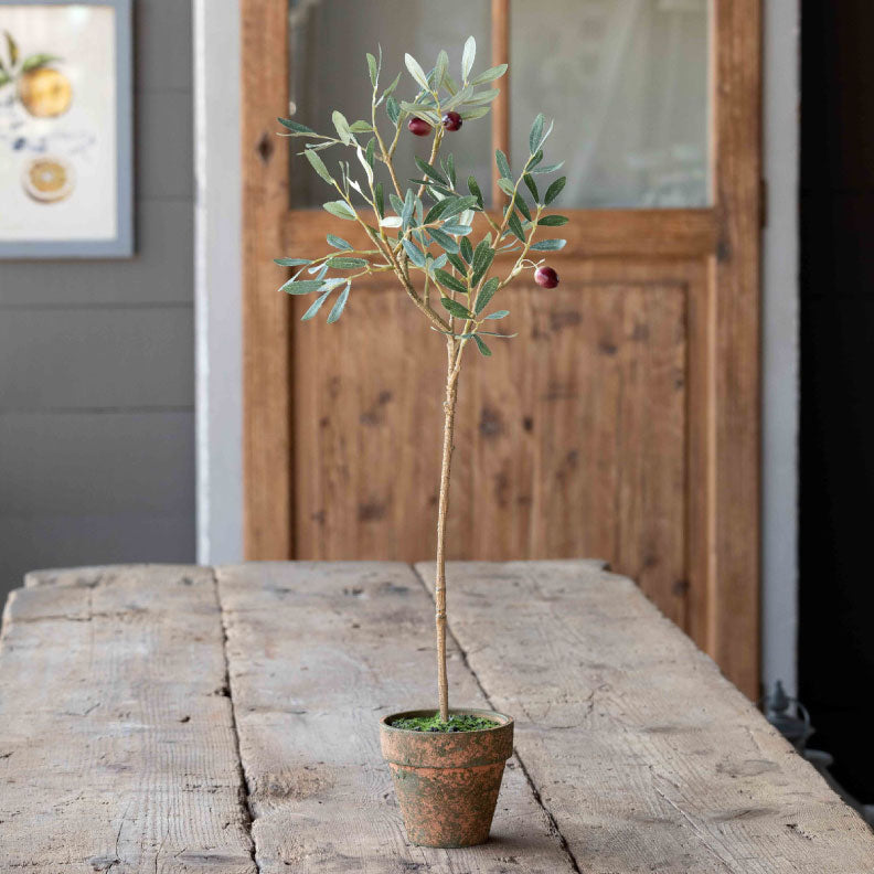 OLIVE TOPIARY POTTED - Bungalow 56