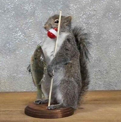 Fisherman Fishing Squirrel Taxidermy Animal Statue on Base Home or Office Gift