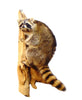 Climbing Raccoon Professional Taxidermy Mounted Animal Statue Home or Office Gift