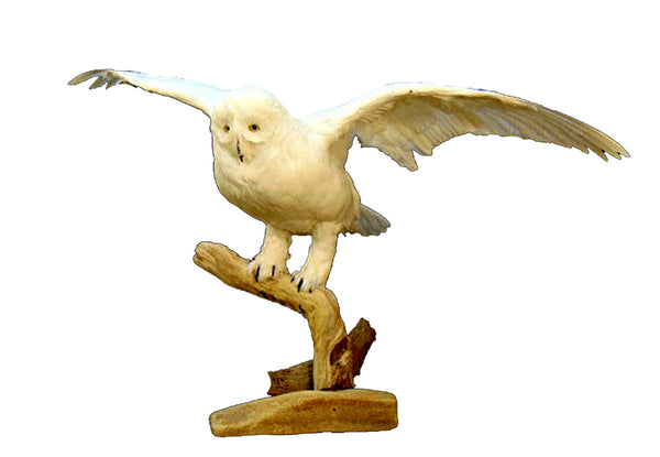 Flying Faux Snow Owl Professional Reproduction Taxidermy Animal Statue