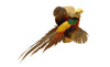 Flying Golden Pheasant Professional Taxidermy Mounted Animal Statue Home or Office Gift