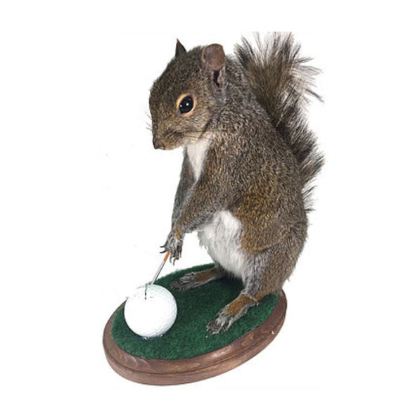 Golfing Squirrel Professional Taxidermy Mounted Animal Statue Home or Office Gift