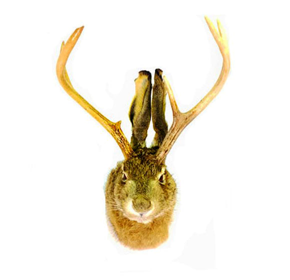Jackalope Professional Taxidermy Animal Statue Home or Office Gift