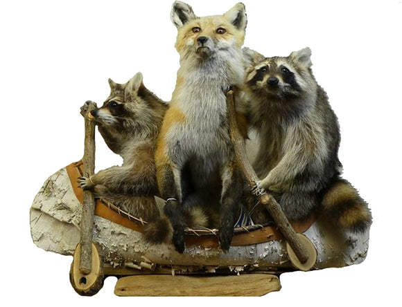 Noah's Ark- Two Raccoons One Fox Professional Taxidermy Mounted Animal Statue Home or Office Gift