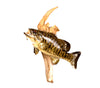 Mounted Small Mouth Bass Fish Professional Taxidermy Animal Wall Statue Home or Office Gift