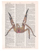 Art N Wordz Brazilian Spider Dictionary Page Pop Art Wall or Desk Art Print Poster