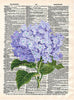 Art N Wordz Hydrangea Flower Original Dictionary Sheet Pop Art Wall or Desk Art Print Poster