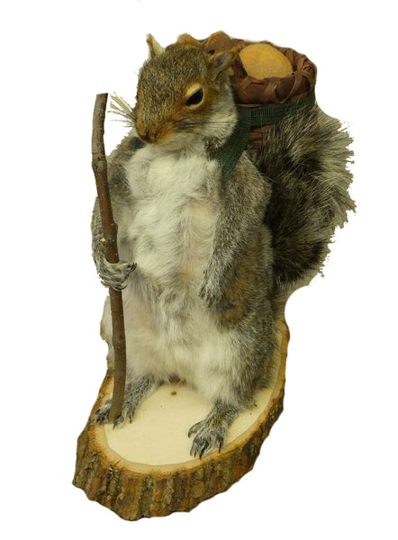 Hiking Squirrel Professional Taxidermy Mounted Animal Statue Home or Office Gift