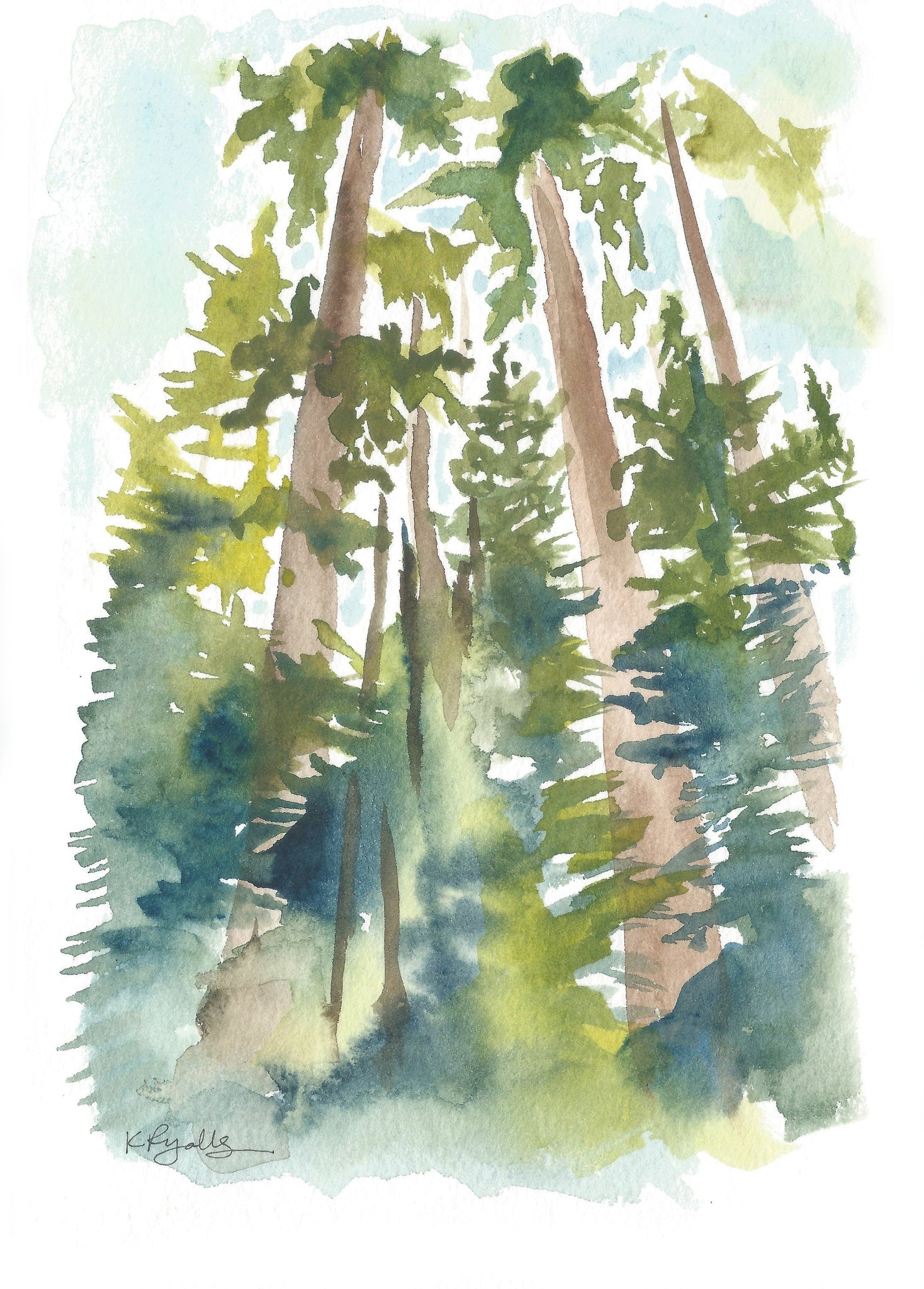 Pine Trees Pacific Northwest Ponderosa Watercolor National Park Print