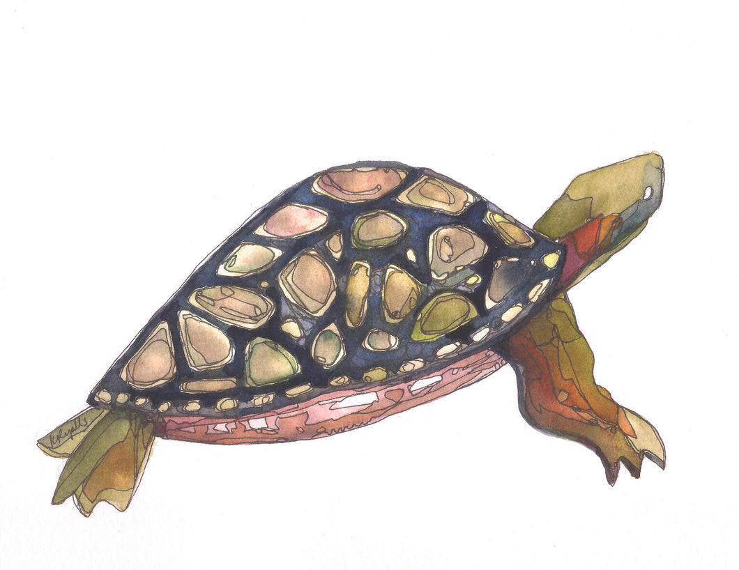 turtle watercolor National Park giclee 5x7