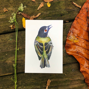 Green Bird painting | Black capped Vireo, watercolor kat ryalls audubon fine art print